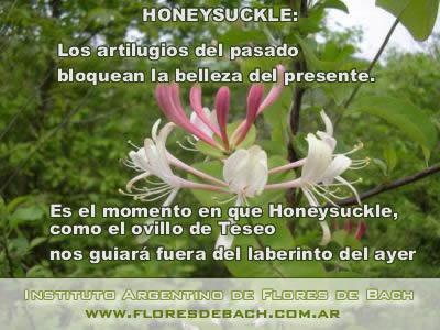 Honeysuckle
