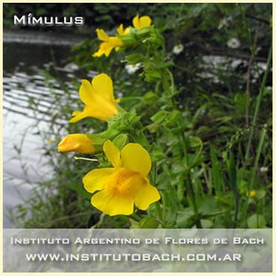 Flores de Bach: Mimulus