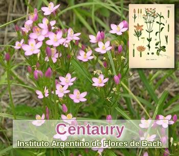 Foto de Flores de Bach: Centaury