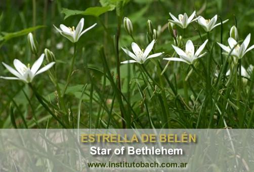Estrella de Belém