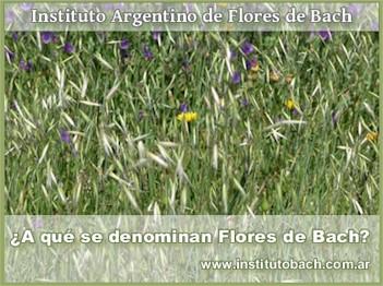 ¿Qué son las Flores de Bach?